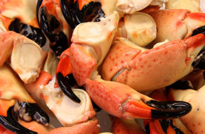 Buy Large Stone Crab Claws Online