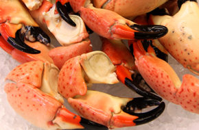 Medium Stone Crab Claws For Sale