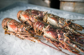 Fresh frozen Whole Florida Lobster