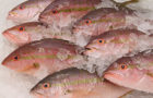 1 - 1.5 lb Whole Cleaned Yellowtail For Sale Online