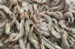 Shrimp 1/2 lb (Bag)